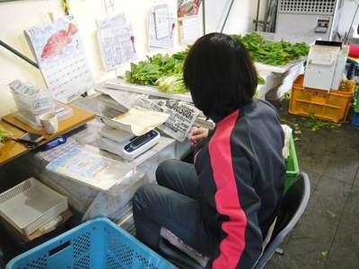 水耕栽培 ほうれん草、サラダレタス、水菜!収穫と出荷の様子を取材してきました!!_a0254656_17551117.jpg