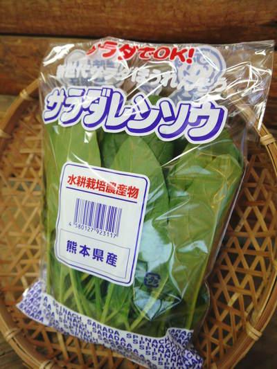 水耕栽培 ほうれん草、サラダレタス、水菜!収穫と出荷の様子を取材してきました!!_a0254656_177375.jpg