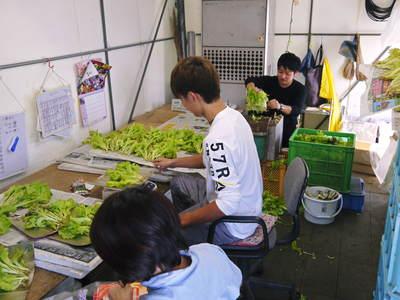 水耕栽培 ほうれん草、サラダレタス、水菜!収穫と出荷の様子を取材してきました!!_a0254656_1805323.jpg
