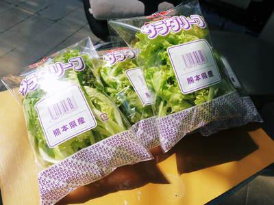 水耕栽培 ほうれん草、サラダレタス、水菜!収穫と出荷の様子を取材してきました!!_a0254656_18193382.jpg