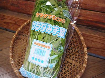 水耕栽培 ほうれん草、サラダレタス、水菜!収穫と出荷の様子を取材してきました!!_a0254656_18305071.jpg