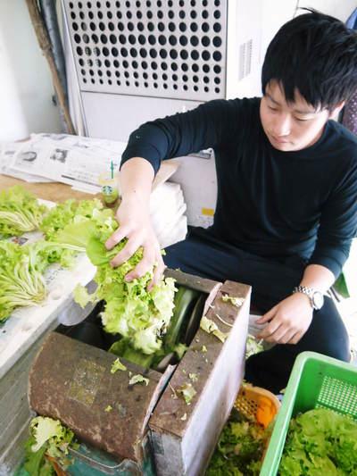 水耕栽培 ほうれん草、サラダレタス、水菜!収穫と出荷の様子を取材してきました!!_a0254656_1833449.jpg
