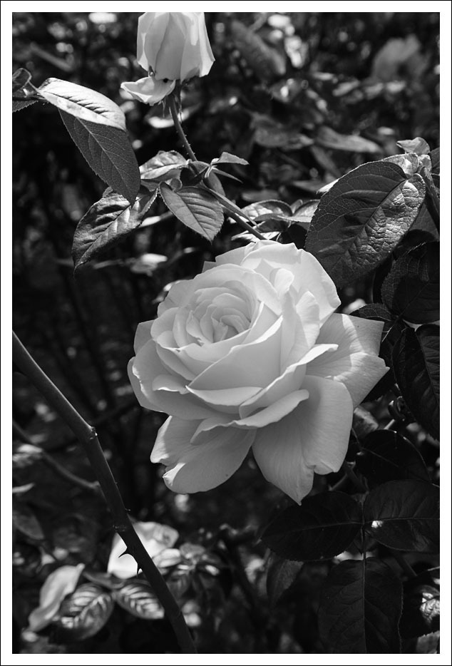 京都府立植物園(8)_e0354867_21045595.jpg