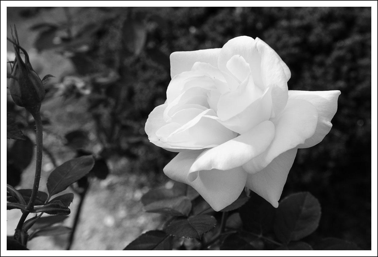 京都府立植物園(8)_e0354867_21050556.jpg