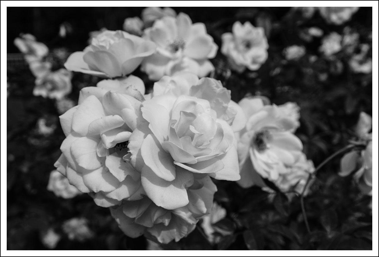 京都府立植物園(8)_e0354867_21051998.jpg