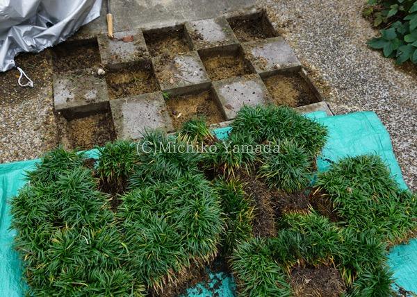 タマリュウの使い方。日陰の植栽。_a0139105_932322.jpg