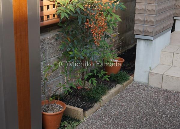 タマリュウの使い方。日陰の植栽。_a0139105_9464239.jpg