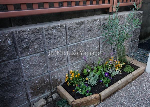 タマリュウの使い方。日陰の植栽。_a0139105_9475578.jpg