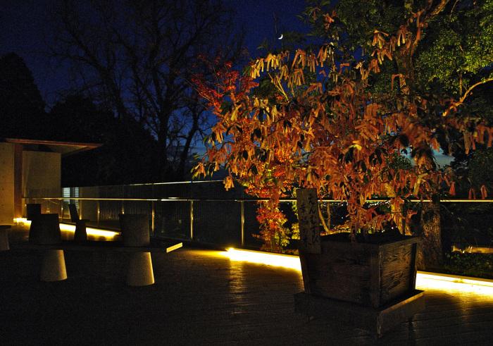 竈門神社(かまど)_f0315034_15340822.jpg
