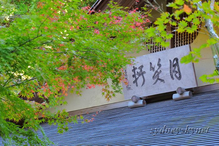 鎌倉 3 ~明月院~_f0084337_21012264.jpg