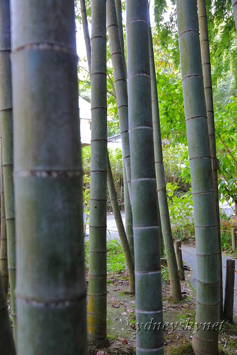 鎌倉 3 ~明月院~_f0084337_21012338.jpg