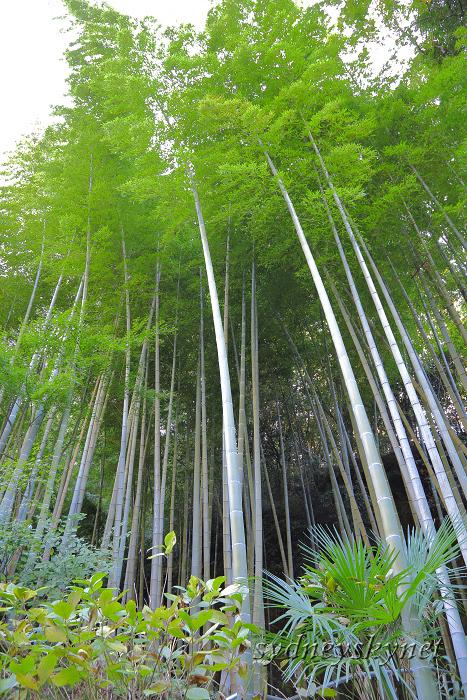 鎌倉 3 ~明月院~_f0084337_21012384.jpg