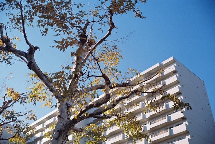 青空と白樺の古木とローライ35のメンテナンス_c0182775_16552721.jpg