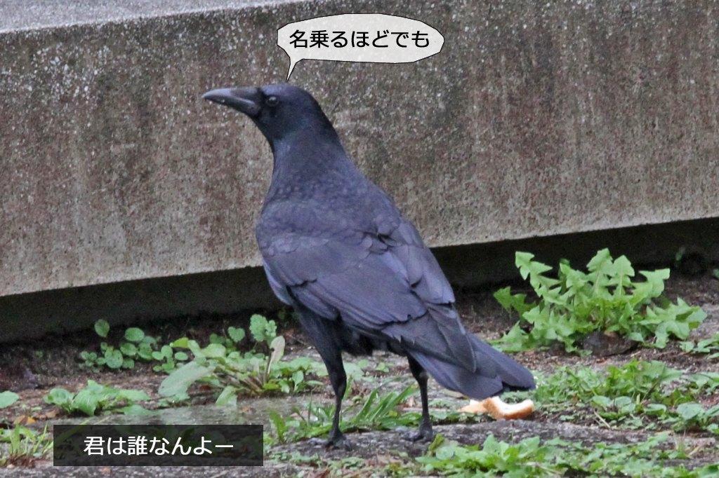 b0174191_15305926.jpg