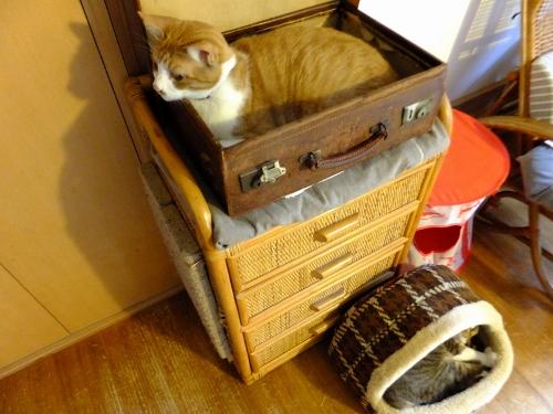 ポーラーベアのラップスカートと猫トイレのお話_c0115596_2144837.jpg