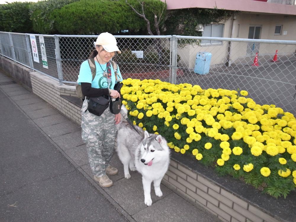 やっぱりおんぶ犬 (≧∇≦)_c0049299_22255260.jpg