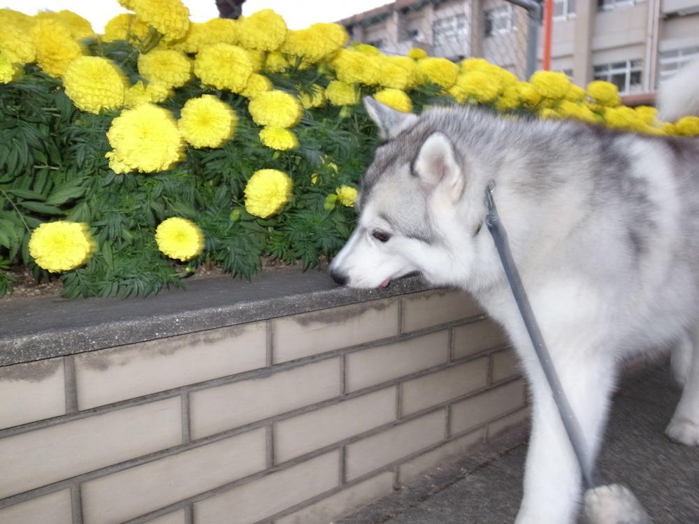 やっぱりおんぶ犬 (≧∇≦)_c0049299_2225575.jpg