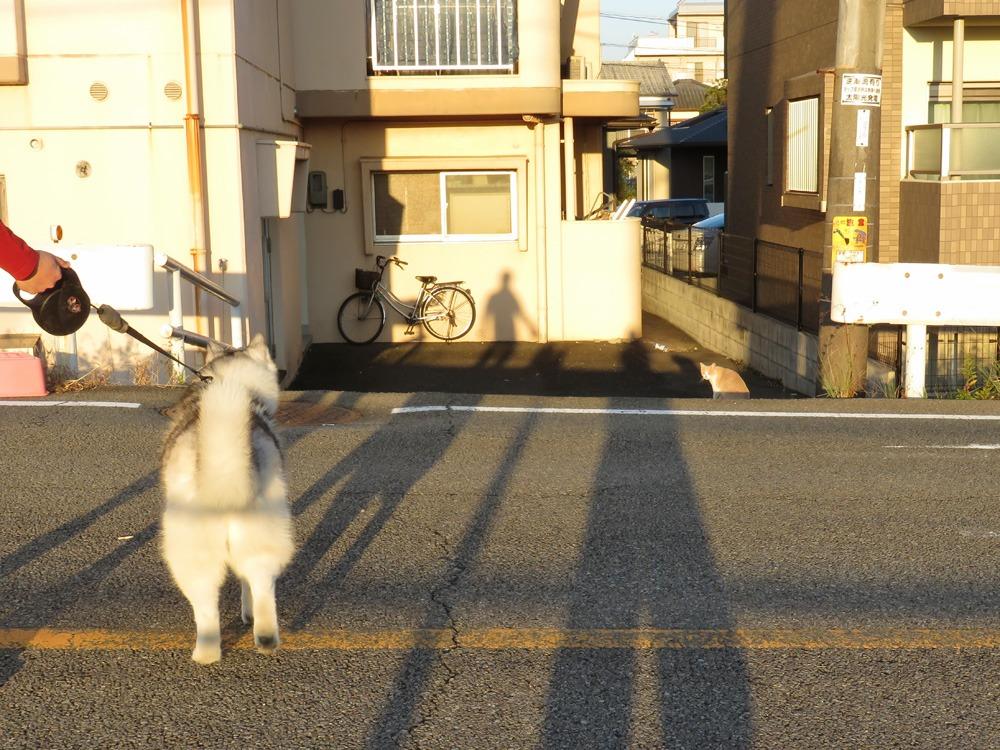 やっぱりおんぶ犬 (≧∇≦)_c0049299_22335455.jpg