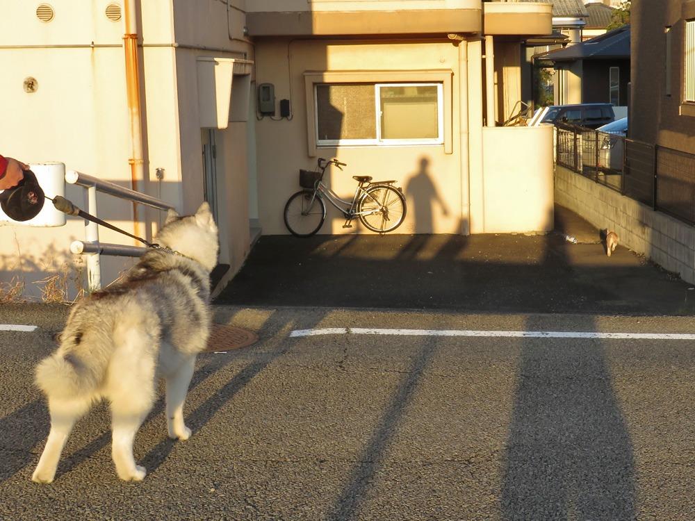 やっぱりおんぶ犬 (≧∇≦)_c0049299_22343974.jpg