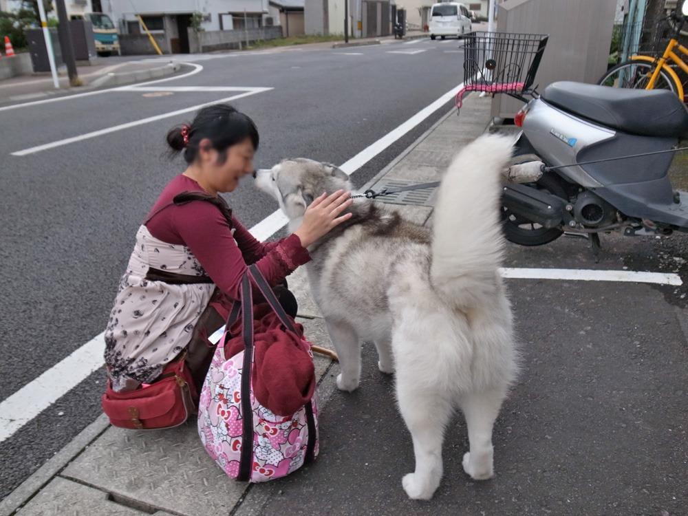 やっぱりおんぶ犬 (≧∇≦)_c0049299_22372423.jpg