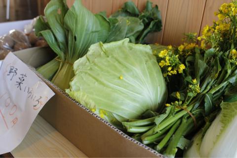 野菜が入荷〜(・∀・)_f0309404_11094956.jpg