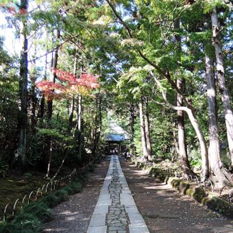東慶寺の野葡萄_c0195909_132447100.jpg