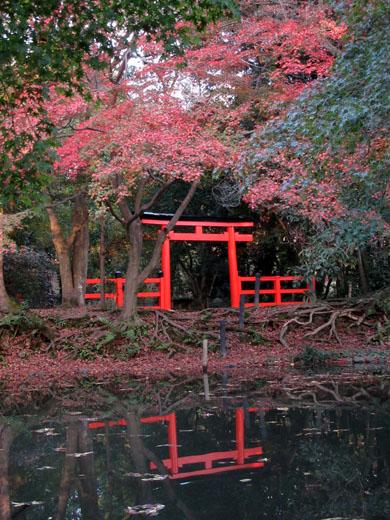 紅葉だより24 植物園_e0048413_19501339.jpg