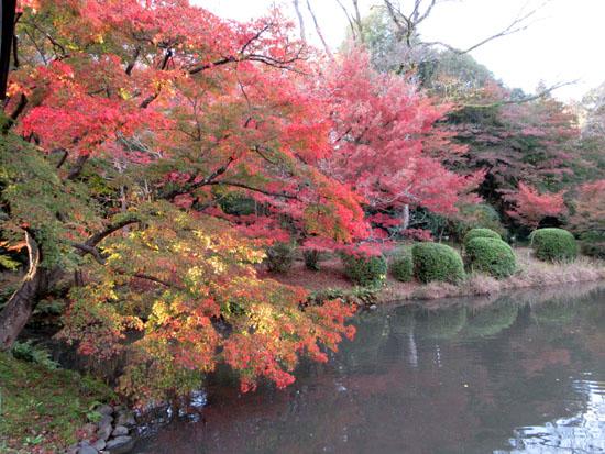 紅葉だより24 植物園_e0048413_19502584.jpg