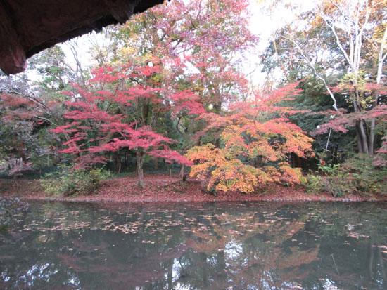 紅葉だより24 植物園_e0048413_19503432.jpg