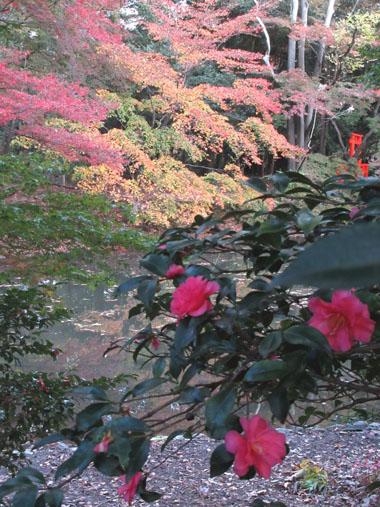 紅葉だより24 植物園_e0048413_19504767.jpg