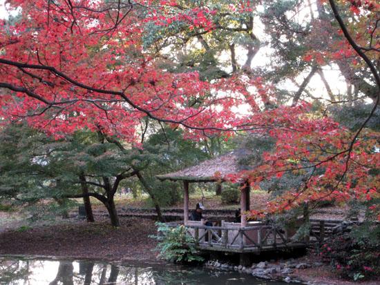 紅葉だより24 植物園_e0048413_19505861.jpg