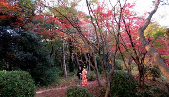 紅葉だより24 植物園_e0048413_1951211.jpg