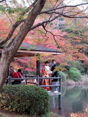 紅葉だより24 植物園_e0048413_19513235.jpg