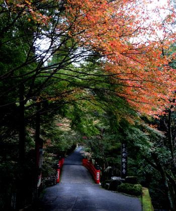 紅葉だより25 今熊野観音寺_e0048413_20274347.jpg