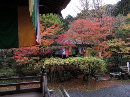 紅葉だより25 今熊野観音寺_e0048413_20282898.jpg