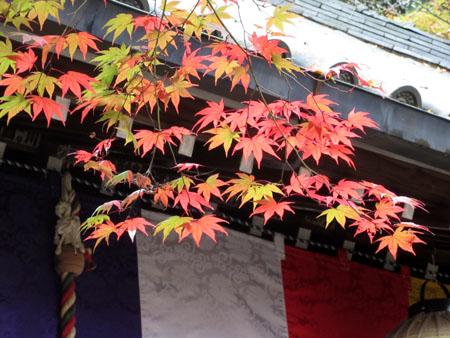 紅葉だより25 今熊野観音寺_e0048413_20292627.jpg