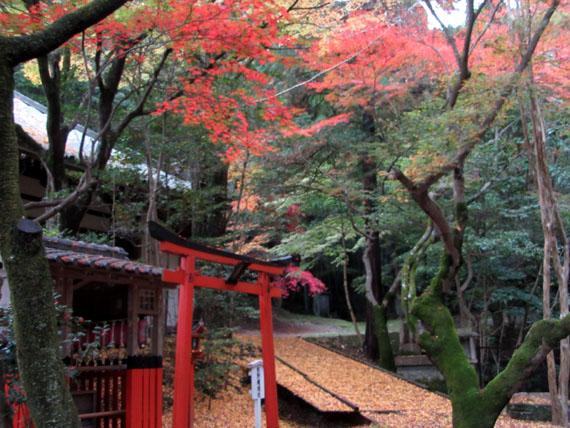 紅葉だより25 今熊野観音寺_e0048413_2033752.jpg