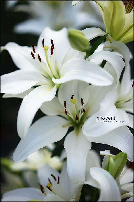 innocent_f0100215_21505892.jpg
