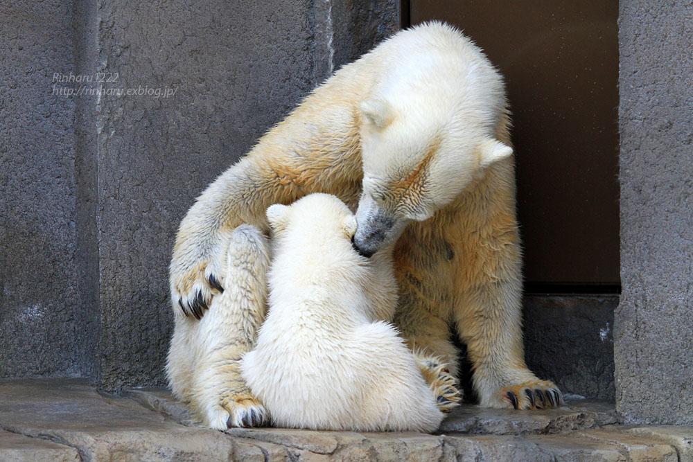 2015.4.30 円山動物園☆ホッキョクグマのララとリラ<その5>【Polar bear】_f0250322_22115221.jpg