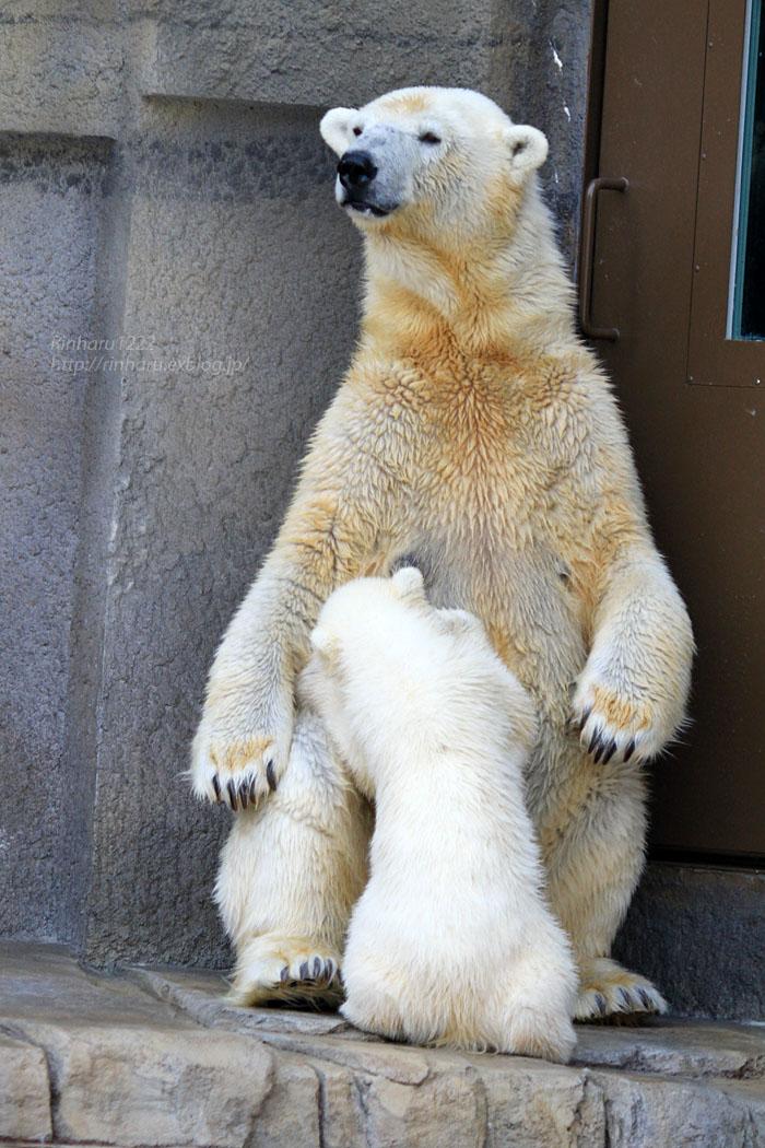 2015.4.30 円山動物園☆ホッキョクグマのララとリラ<その5>【Polar bear】_f0250322_22115738.jpg