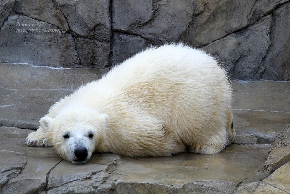 2015.4.30 円山動物園☆ホッキョクグマのララとリラ<その5>【Polar bear】_f0250322_22121328.jpg