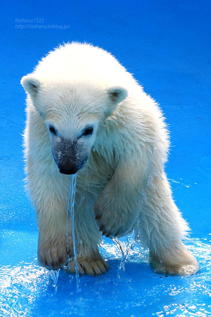 2015.4.30 円山動物園☆ホッキョクグマのララとリラ<その5>【Polar bear】_f0250322_22122215.jpg