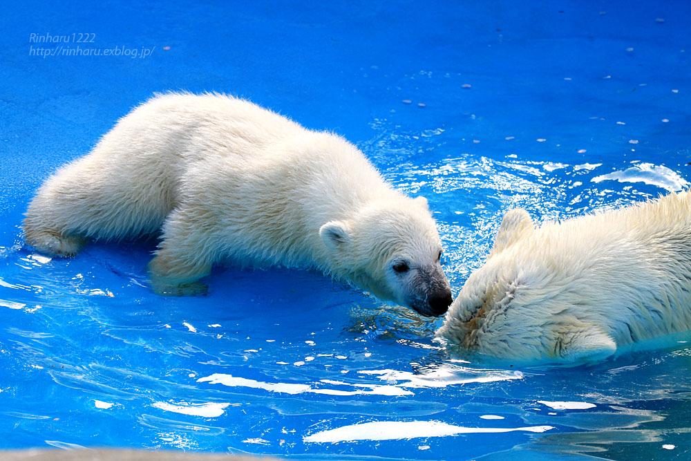 2015.4.30 円山動物園☆ホッキョクグマのララとリラ<その5>【Polar bear】_f0250322_22122596.jpg