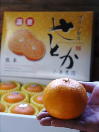 究極の柑橘「せとか」 今年も順調に成長中!!これからビニールをはり最後の仕上げです!!_a0254656_17513799.jpg