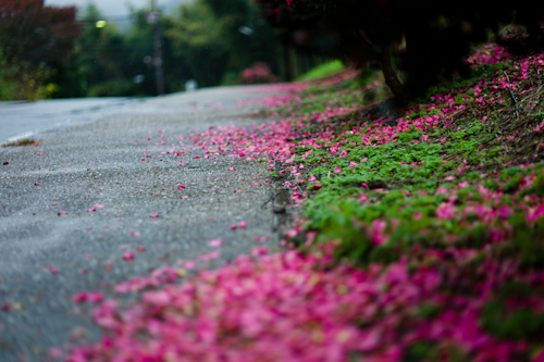 151119 pink carpet_b0129659_6354762.jpg