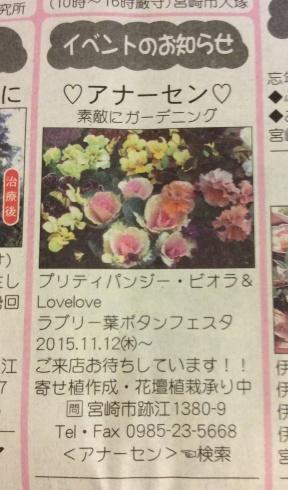 予告なしですが・・・プリティなお花のイベント今日から開催_b0137969_06081959.jpg