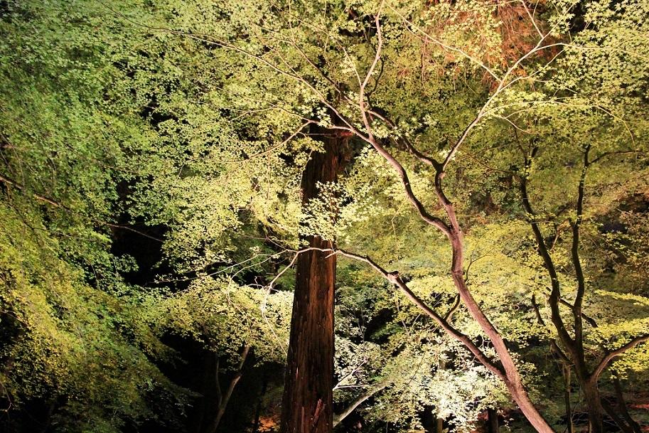 京都最終日 ~嵐山・天龍寺、金戒光明寺ライトアップ~_a0107574_21053642.jpg