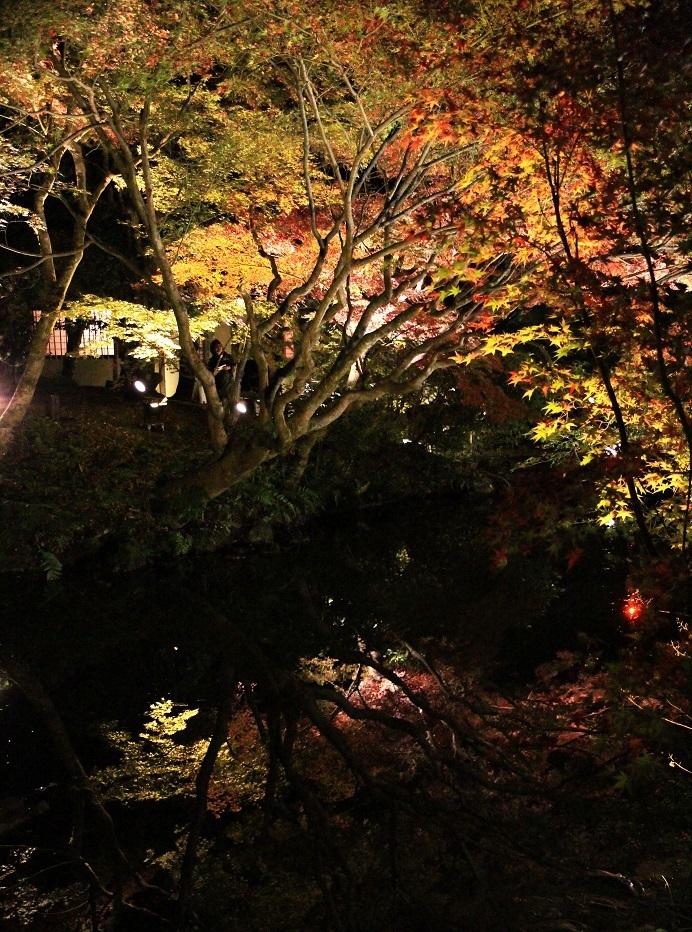 京都最終日 ~嵐山・天龍寺、金戒光明寺ライトアップ~_a0107574_21054886.jpg