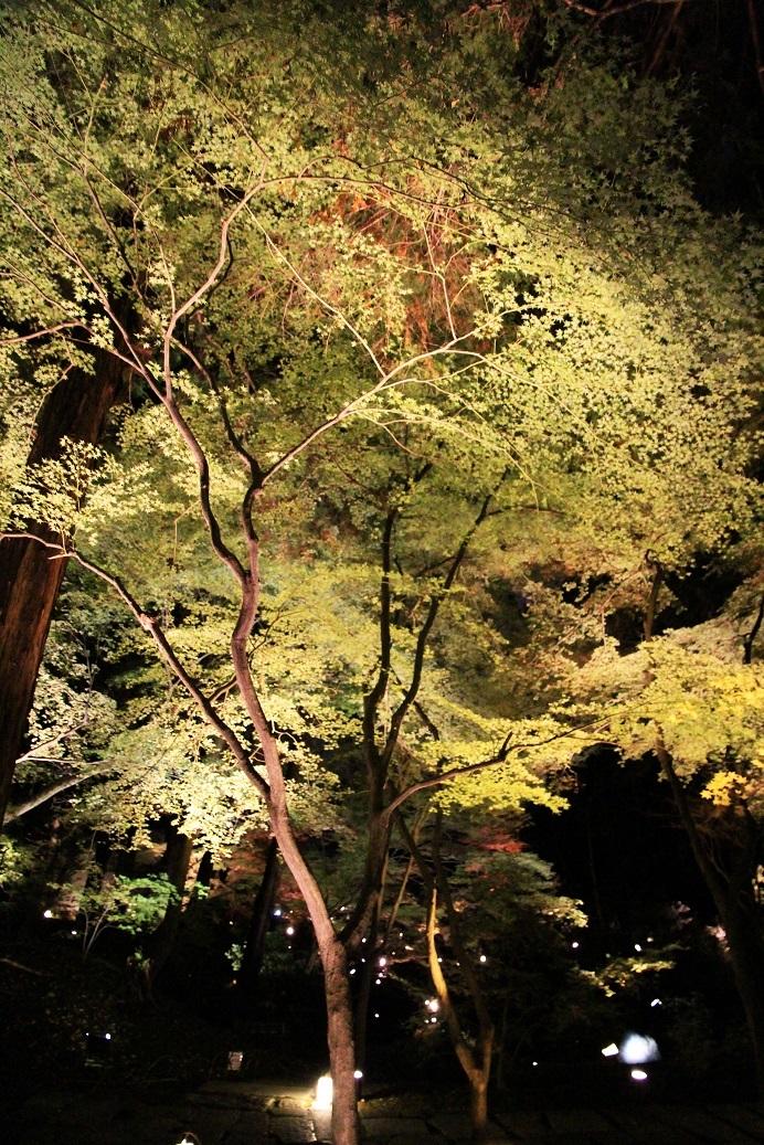 京都最終日 ~嵐山・天龍寺、金戒光明寺ライトアップ~_a0107574_21060462.jpg