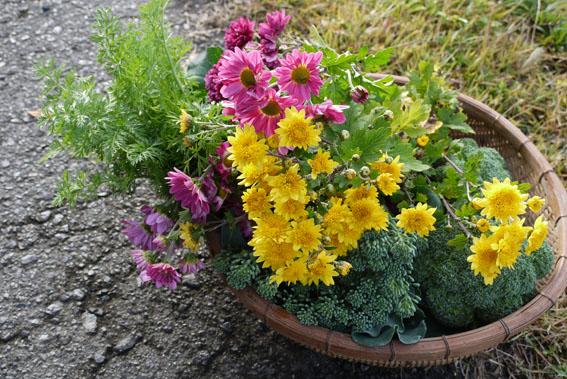 野菜畑のブーケをバスケットに_c0334574_1723267.jpg